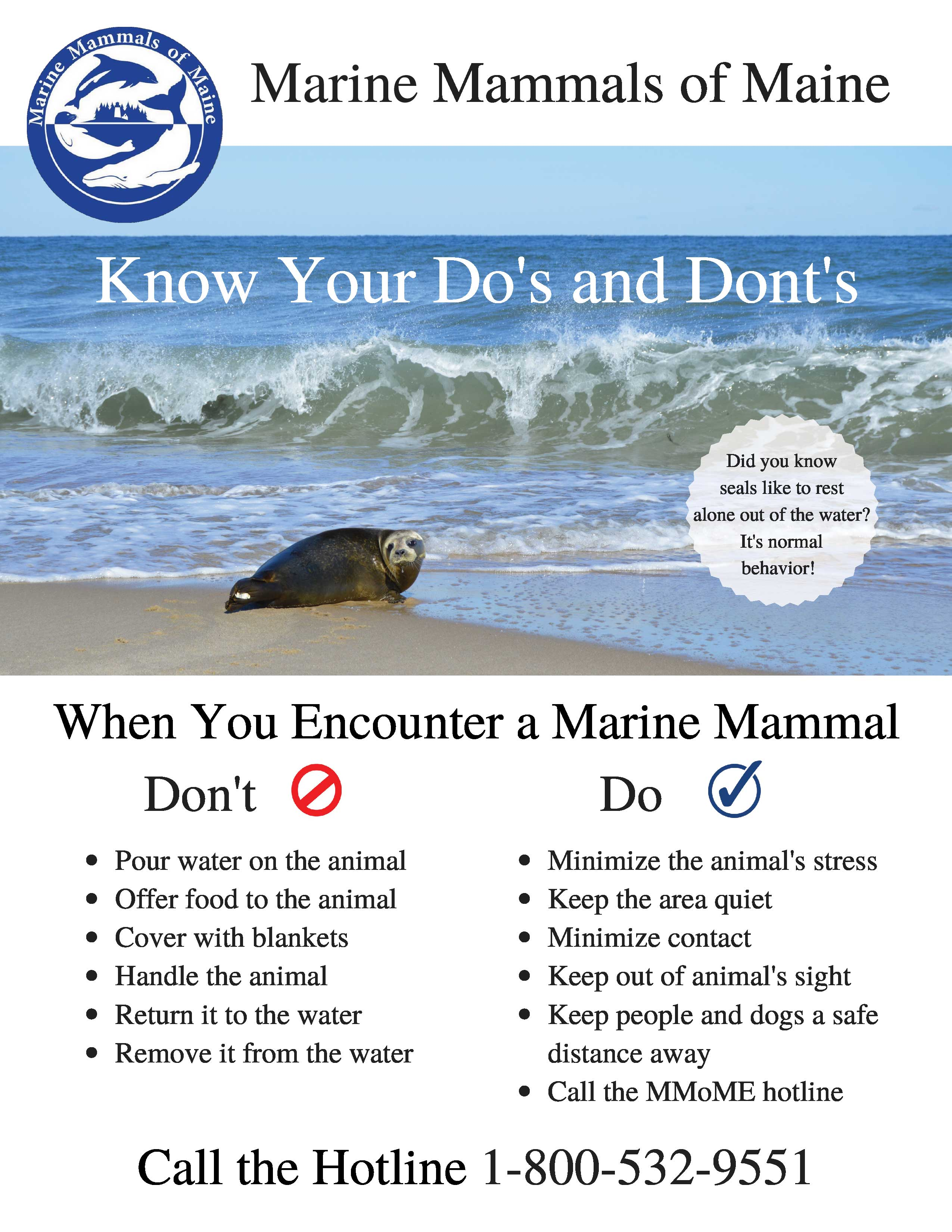 Marine-Mammals-of-Maine-pup-season-poster