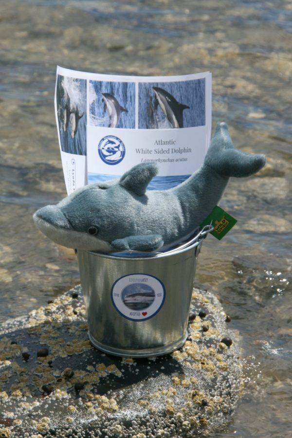 white sided dolphin adoption bucket