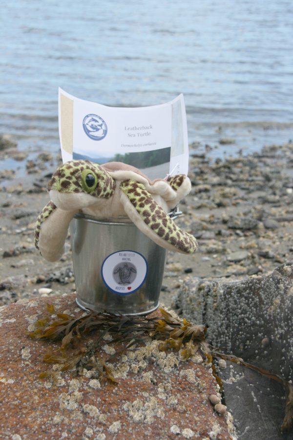 sea turtle adoption bucket