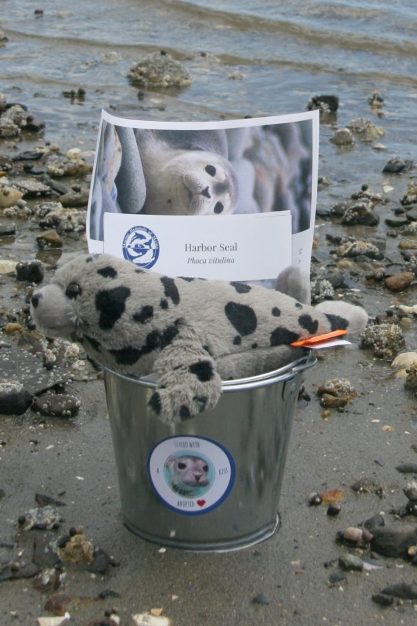 maine harbor seal adoption