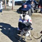 Slugger the sea dog meets a land puppy