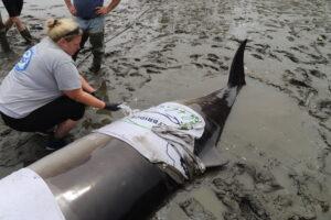 Beaked Whale Response
