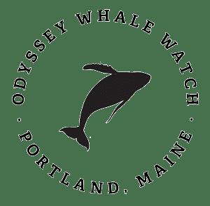 Odyssey Whale Watch, Portland